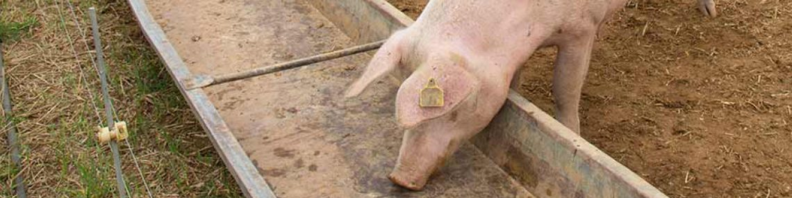 Pig Feed - Farming & Smallholder - Mole Avon